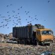 Государственный экологический оператор будет создан в РФ по поручению президента